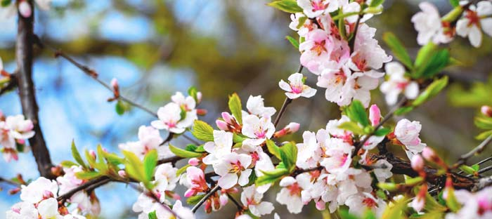 Spring is a wonderful time to enjoy shopping, dining, and the wonderful sights in Glenside, Montgomery County PA